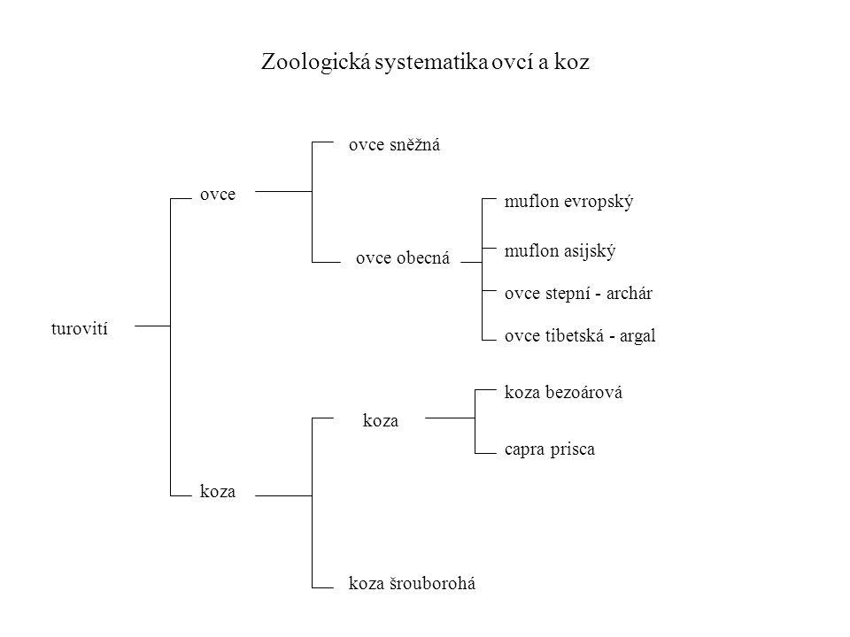 Zoologická systematika ovcí a koz