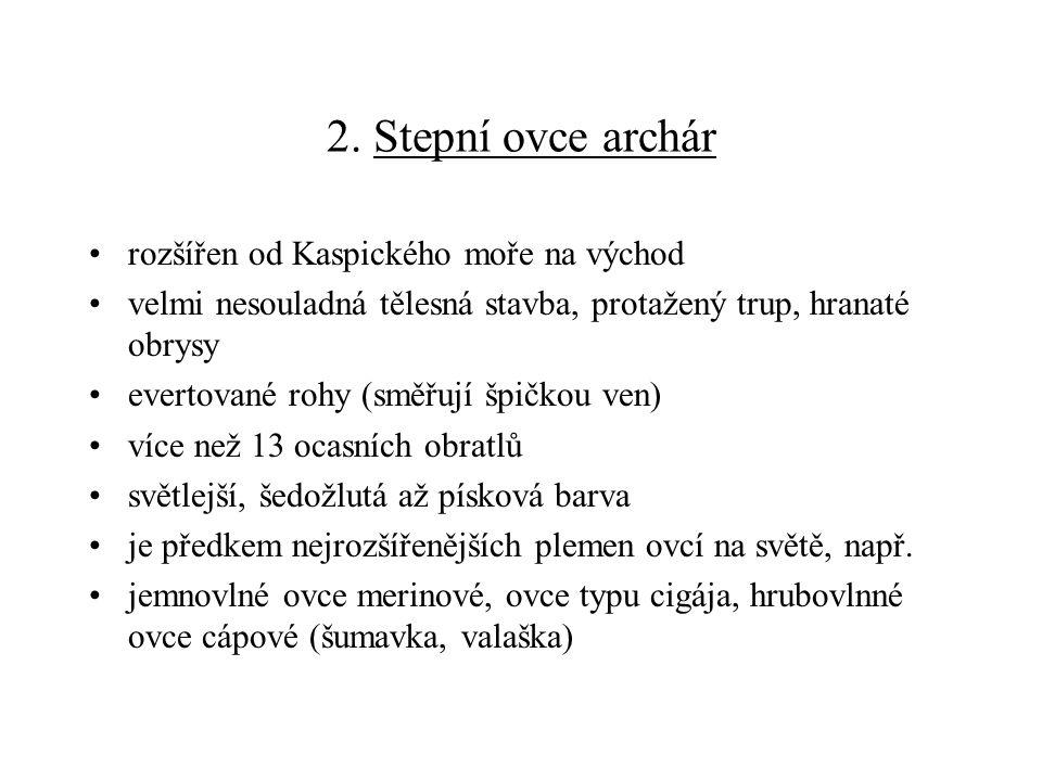 2. Stepní ovce archár rozšířen od Kaspického moře na východ
