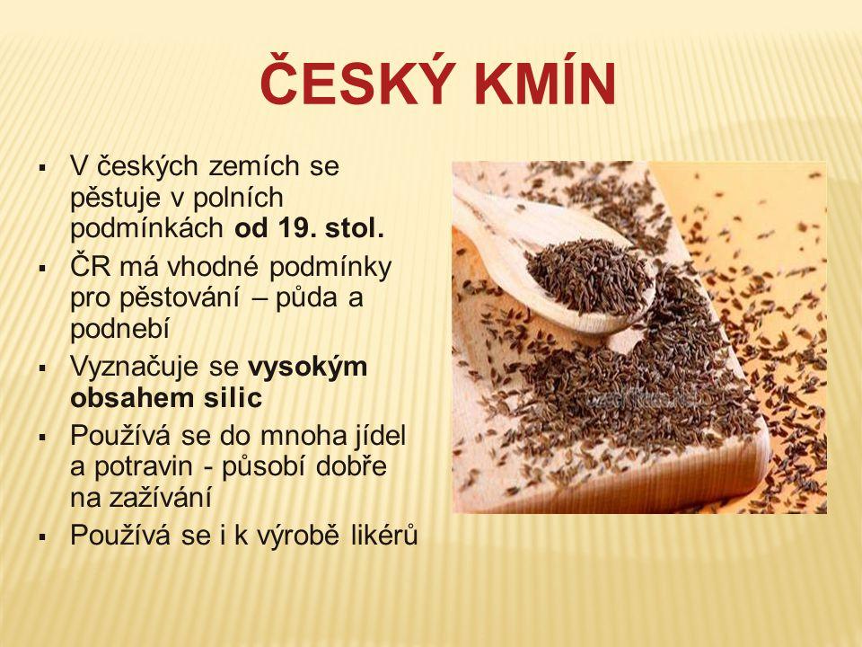 ČESKÝ KMÍN V českých zemích se pěstuje v polních podmínkách od 19. stol. ČR má vhodné podmínky pro pěstování – půda a podnebí.