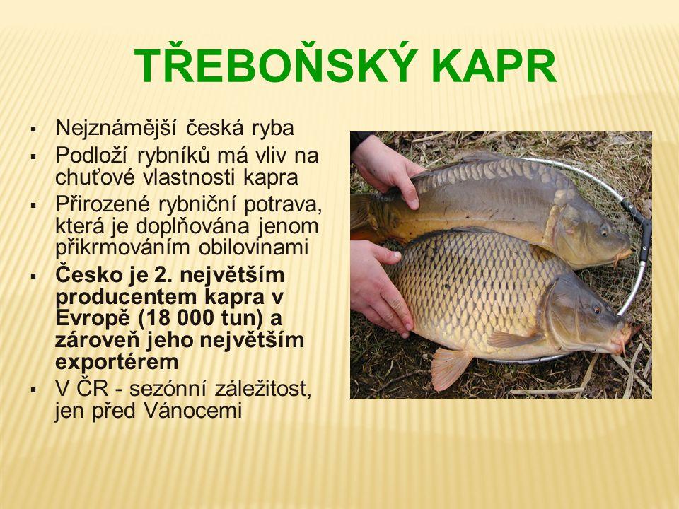 TŘEBOŇSKÝ KAPR Nejznámější česká ryba