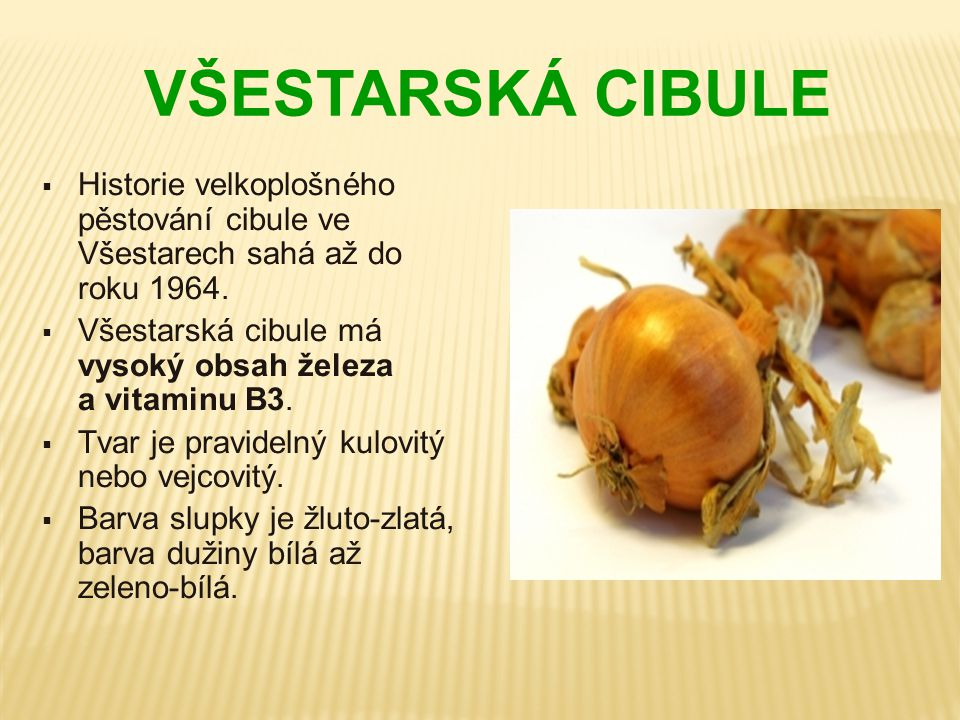 VŠESTARSKÁ CIBULE Historie velkoplošného pěstování cibule ve Všestarech sahá až do roku 1964.
