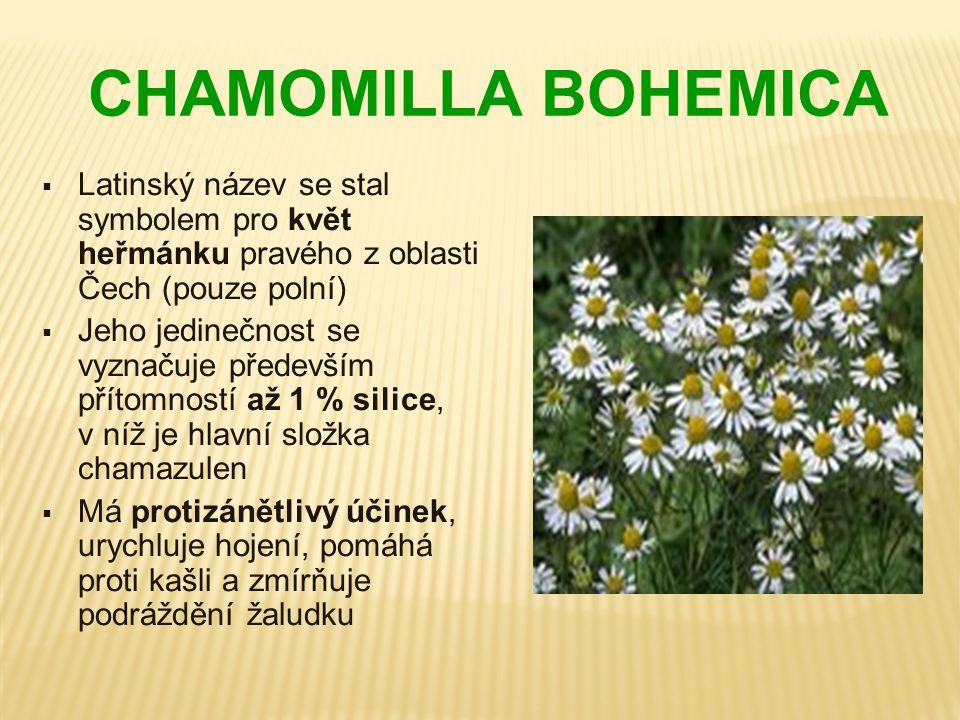 CHAMOMILLA BOHEMICA Latinský název se stal symbolem pro květ heřmánku pravého z oblasti Čech (pouze polní)