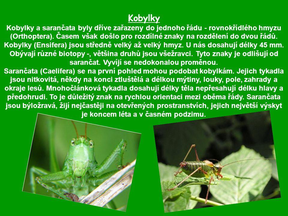 Kobylky