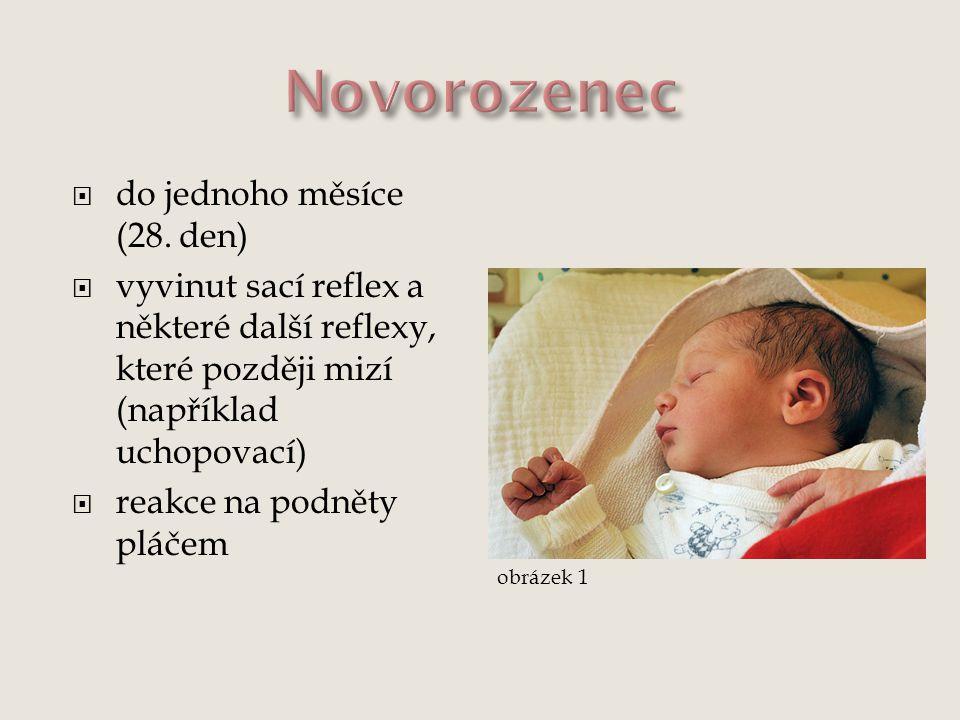 Novorozenec do jednoho měsíce (28. den)