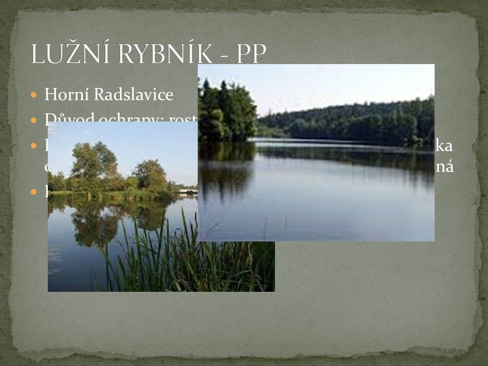 LUŽNÍ RYBNÍK - PP Horní Radslavice Důvod ochrany: rostliny v rybníce