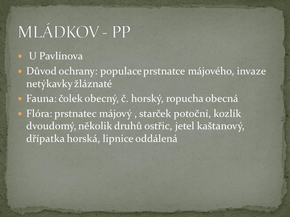 MLÁDKOV - PP U Pavlínova