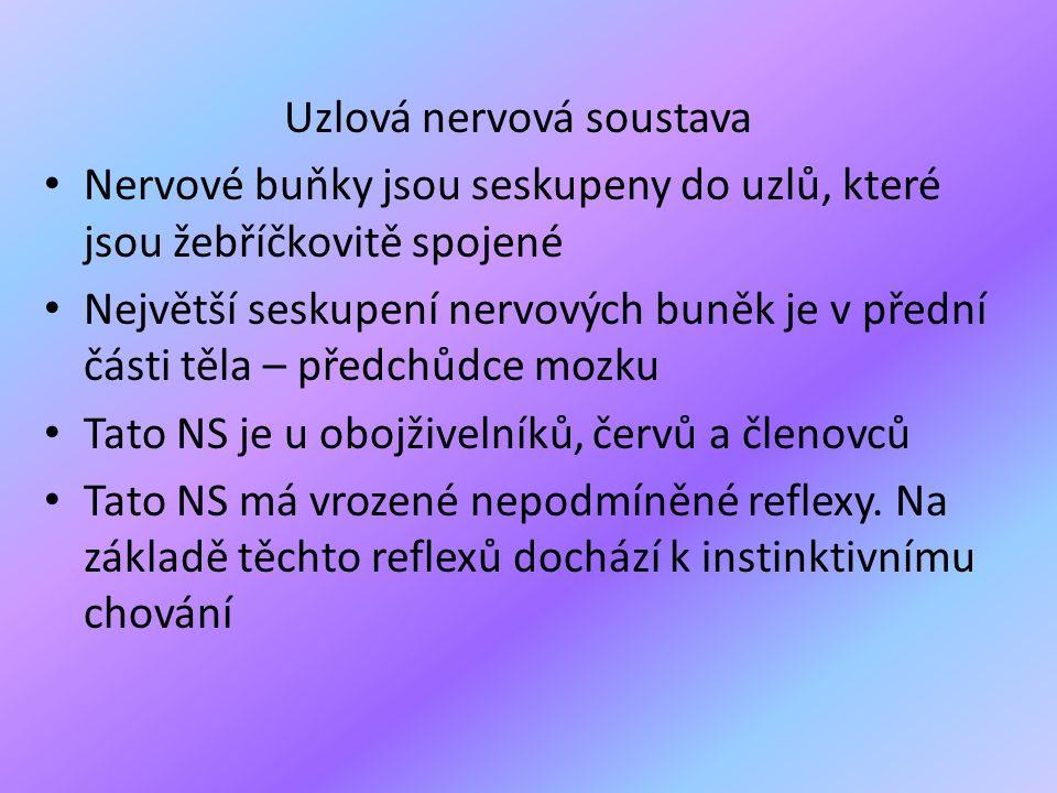 Uzlová nervová soustava