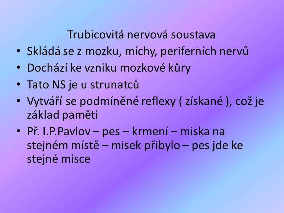 Trubicovitá nervová soustava