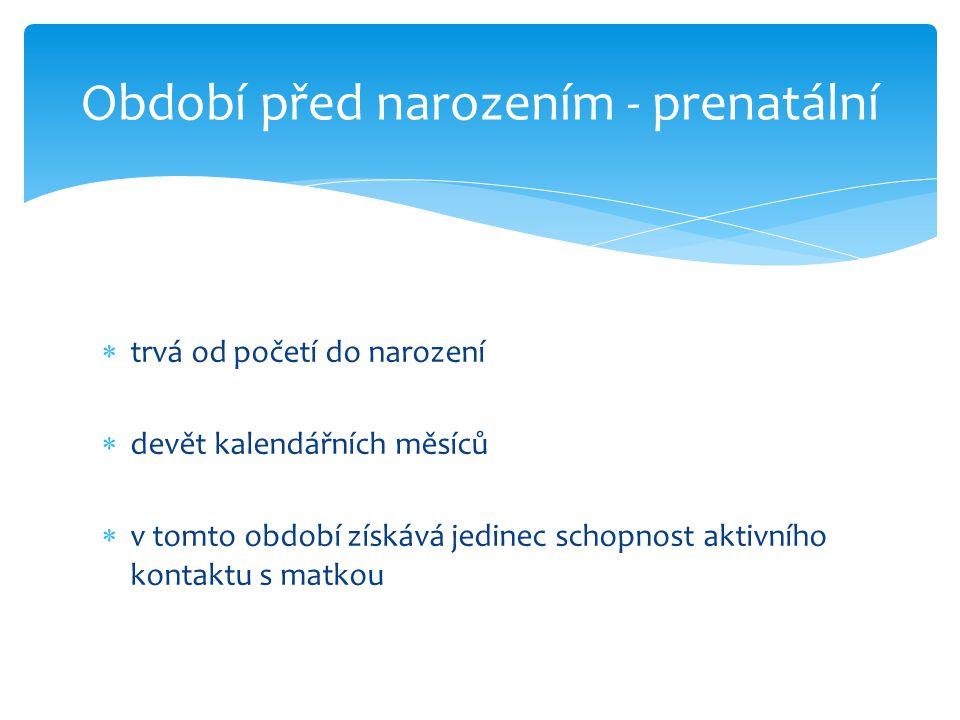 Období před narozením - prenatální