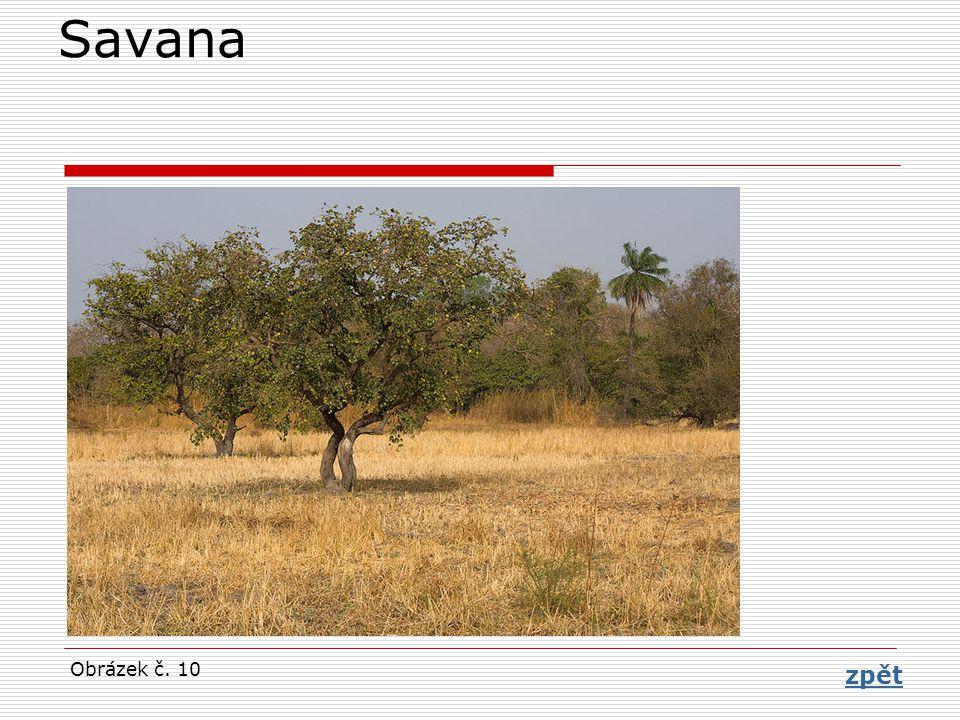 Savana Obrázek č. 10 zpět