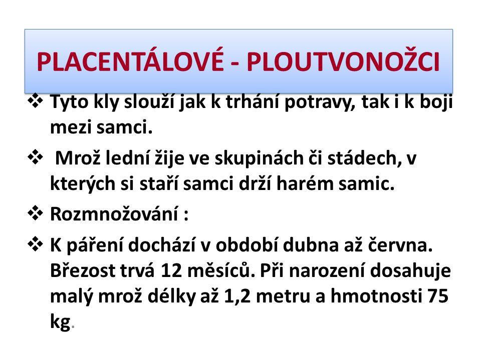 PLACENTÁLOVÉ - PLOUTVONOŽCI