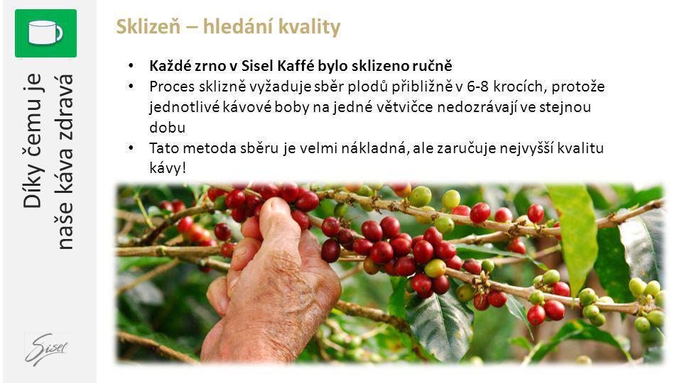 Díky čemu je naše káva zdravá Sklizeň – hledání kvality 1