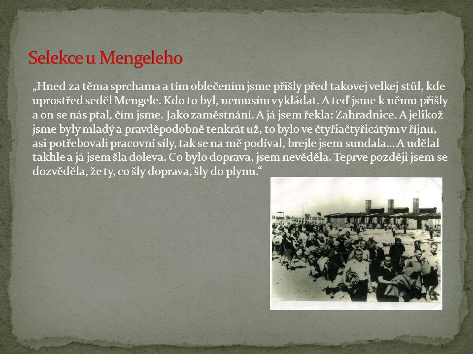 Selekce u Mengeleho