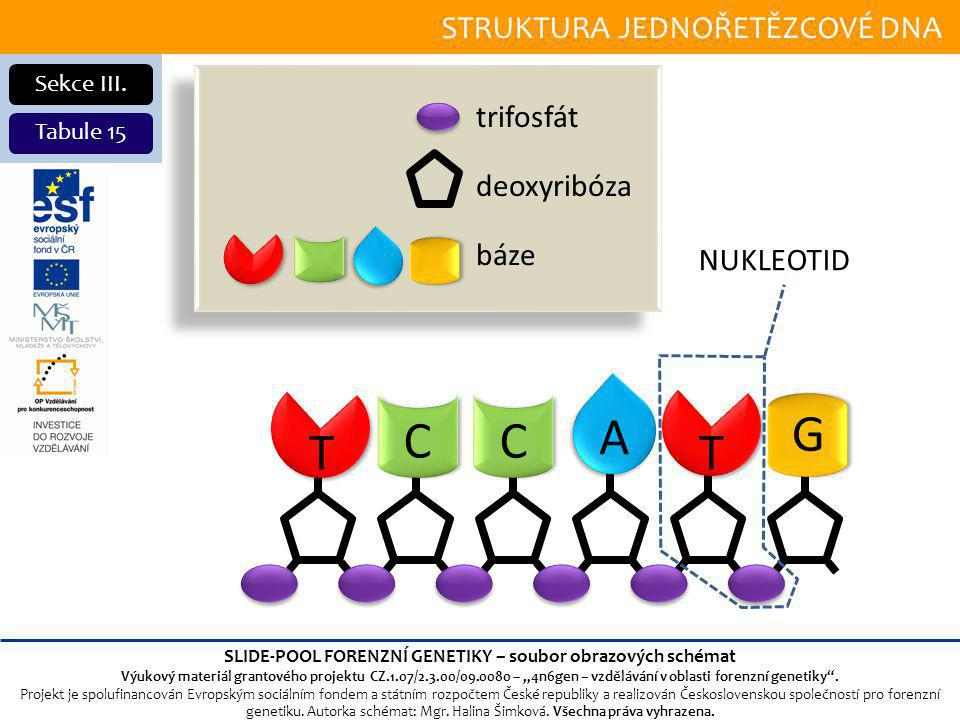 SLIDE-POOL FORENZNÍ GENETIKY – soubor obrazových schémat