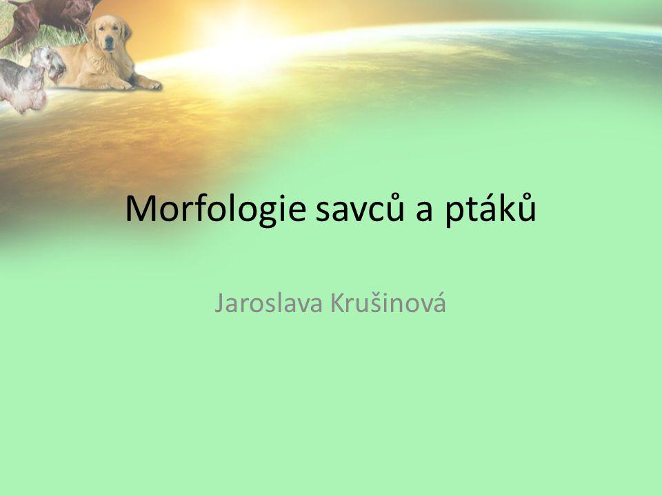 Morfologie savců a ptáků