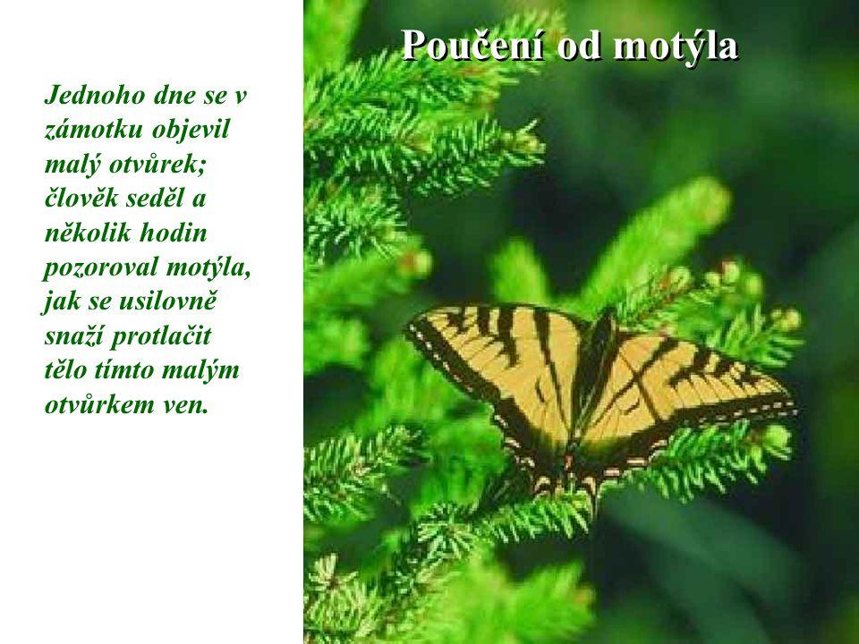 Poučení od motýla