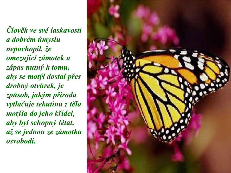 Člověk ve své laskavosti a dobrém úmyslu nepochopil, že omezující zámotek a zápas nutný k tomu, aby se motýl dostal přes drobný otvůrek, je způsob, jakým příroda vytlačuje tekutinu z těla motýla do jeho křídel, aby byl schopný létat, až se jednou ze zámotku osvobodí.