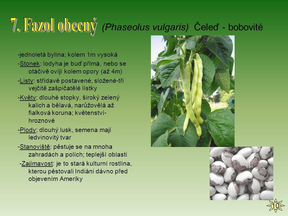 7. Fazol obecný (Phaseolus vulgaris) Čeleď - bobovité 10
