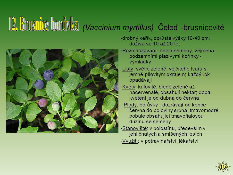 12. Brusnice borůvka (Vaccinium myrtillus) Čeleď -brusnicovité 15