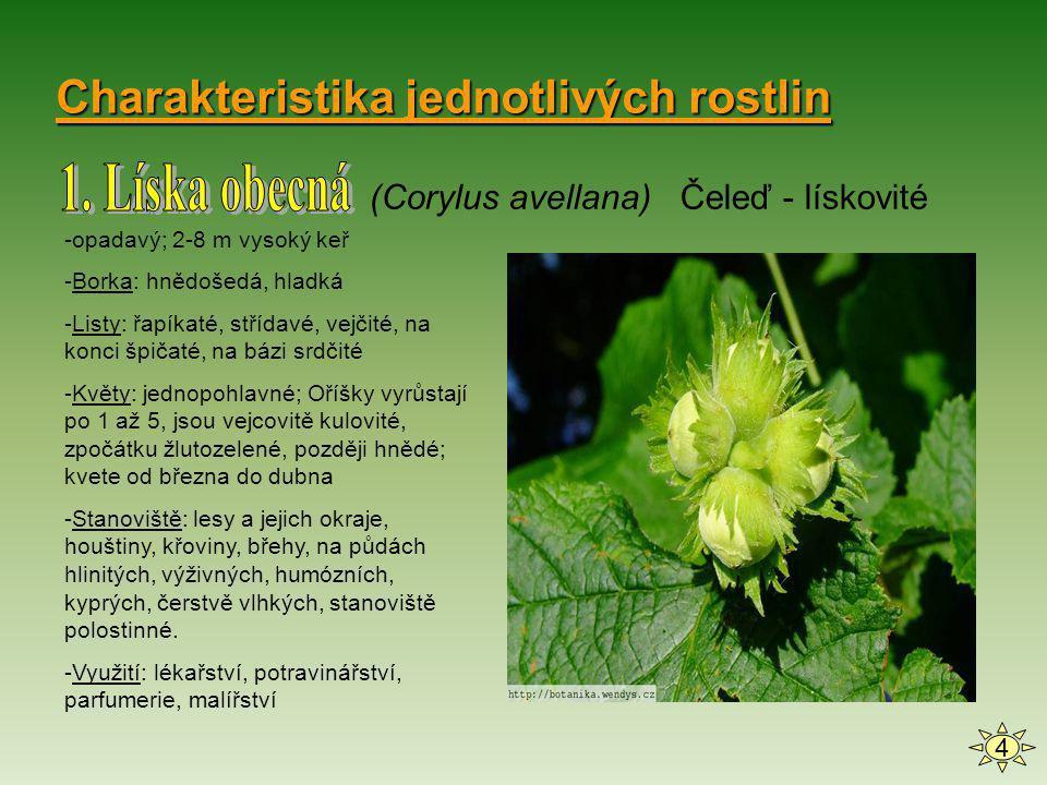 1. Líska obecná Charakteristika jednotlivých rostlin