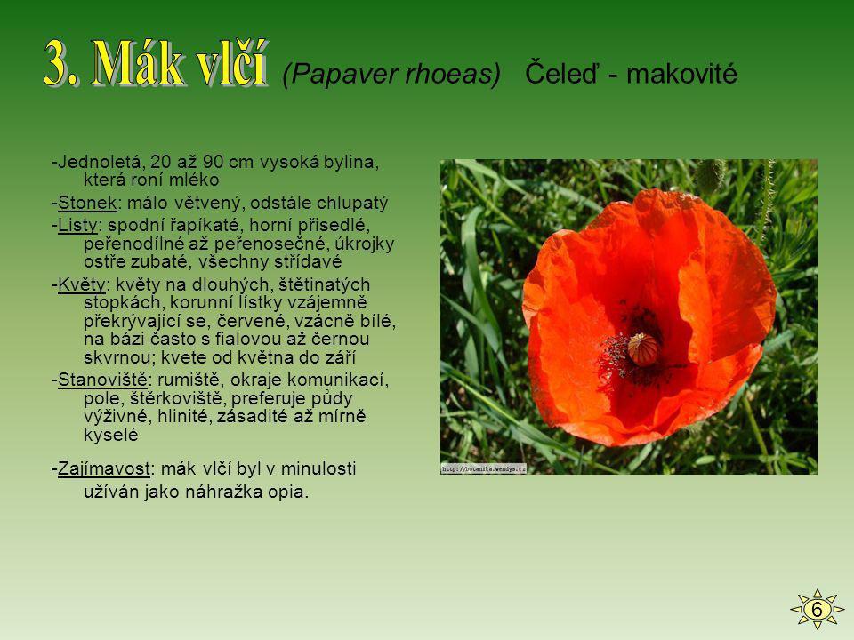 3. Mák vlčí (Papaver rhoeas) Čeleď - makovité 6