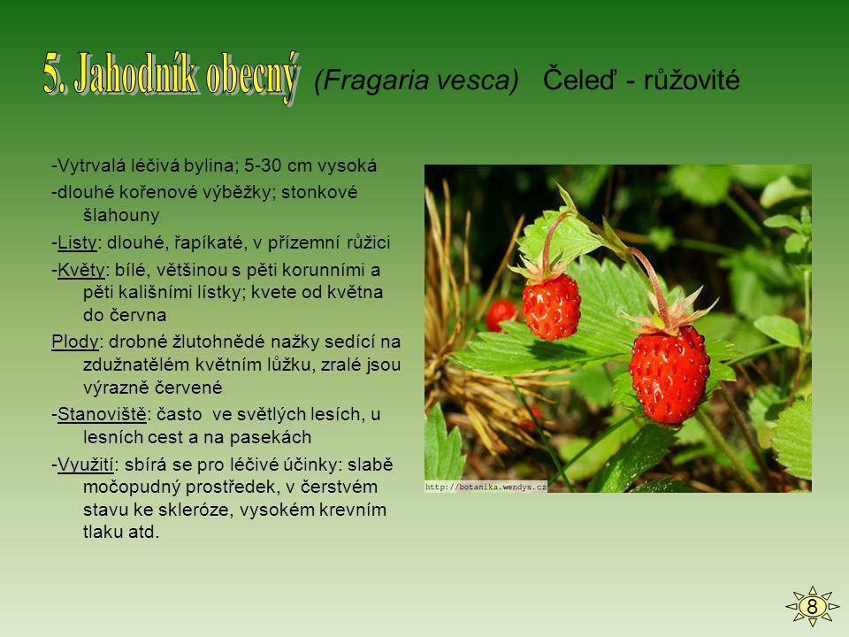 5. Jahodník obecný (Fragaria vesca) Čeleď - růžovité 8