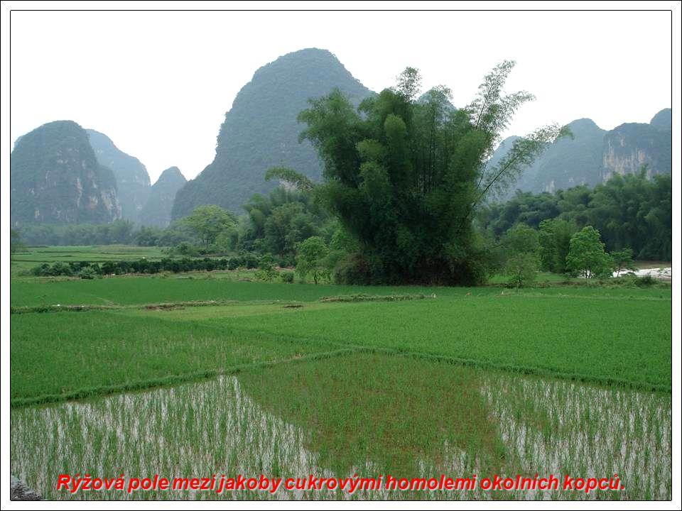 Rýžová pole mezi jakoby cukrovými homolemi okolních kopců.