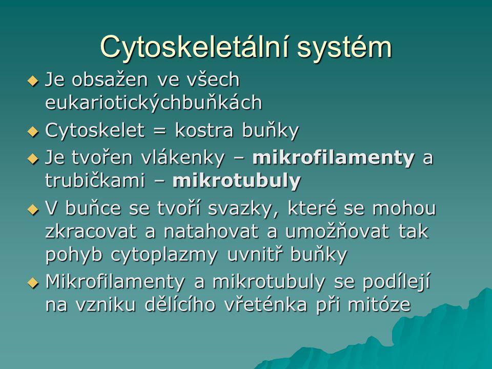 Cytoskeletální systém