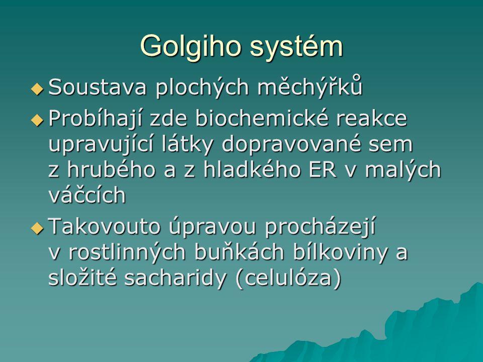 Golgiho systém Soustava plochých měchýřků