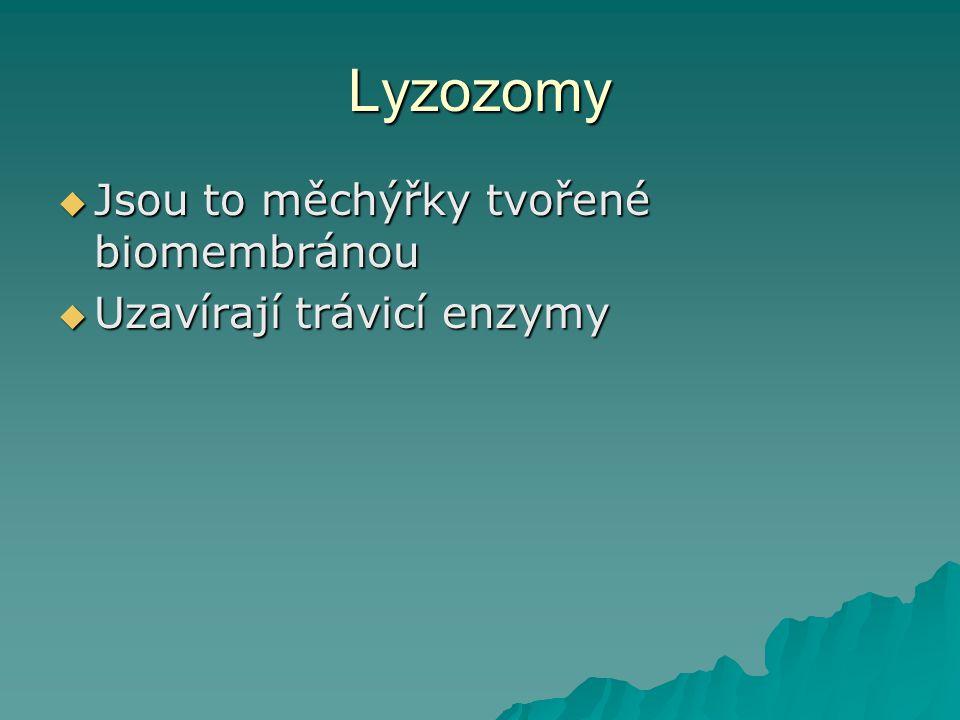 Lyzozomy Jsou to měchýřky tvořené biomembránou