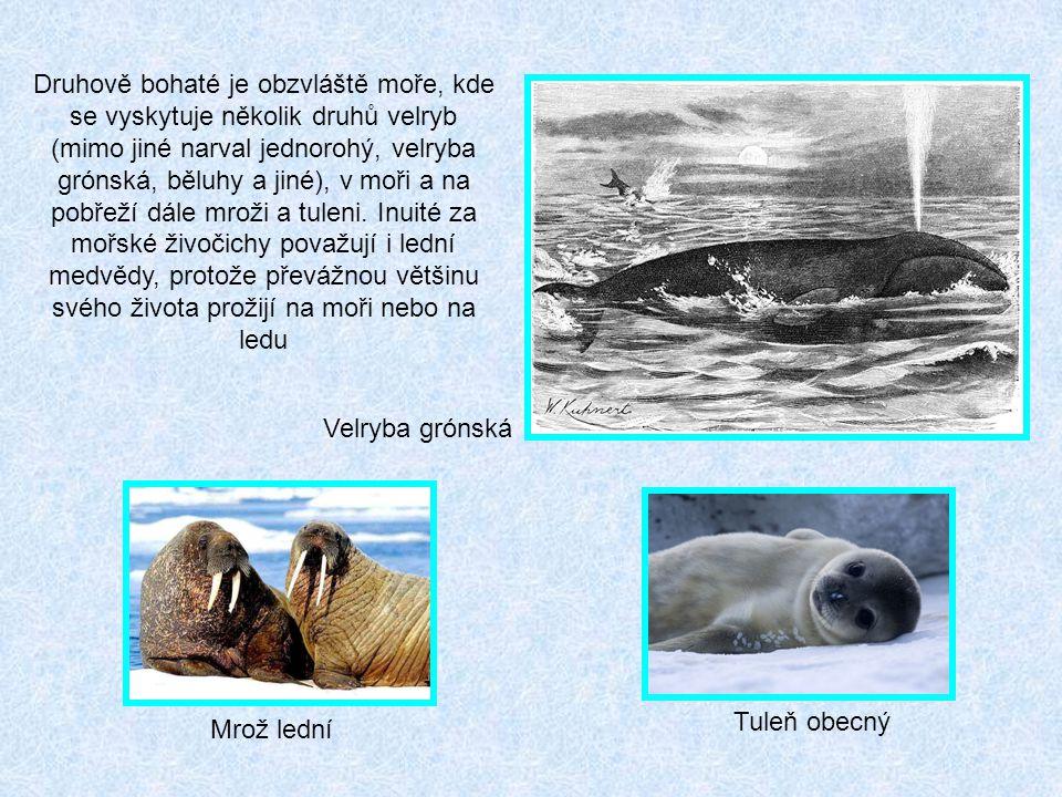 Druhově bohaté je obzvláště moře, kde se vyskytuje několik druhů velryb (mimo jiné narval jednorohý, velryba grónská, běluhy a jiné), v moři a na pobřeží dále mroži a tuleni. Inuité za mořské živočichy považují i lední medvědy, protože převážnou většinu svého života prožijí na moři nebo na ledu