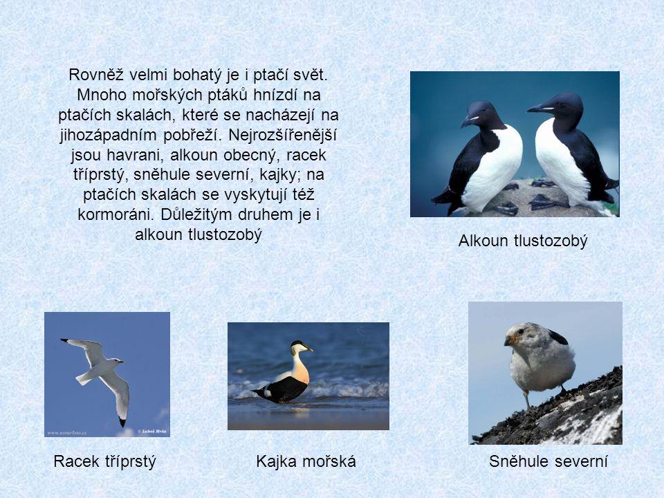 Rovněž velmi bohatý je i ptačí svět