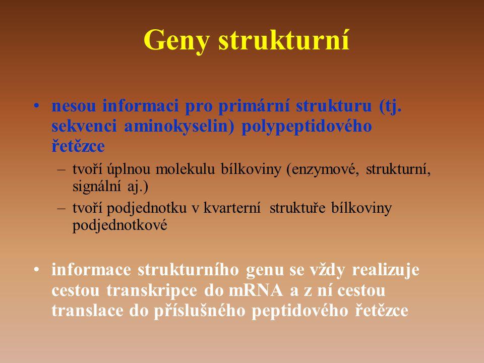 Geny strukturní nesou informaci pro primární strukturu (tj. sekvenci aminokyselin) polypeptidového řetězce.
