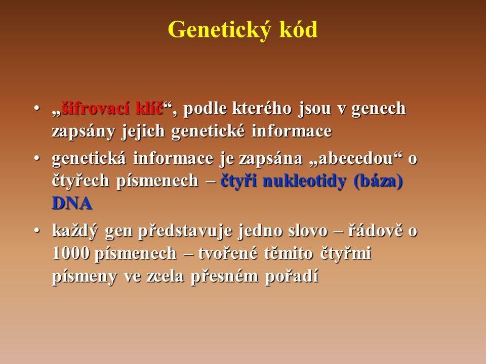 """Genetický kód """"šifrovací klíč , podle kterého jsou v genech zapsány jejich genetické informace."""