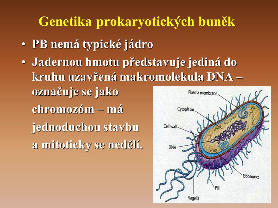 Genetika prokaryotických buněk