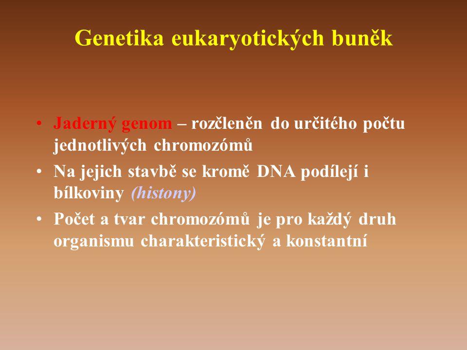 Genetika eukaryotických buněk