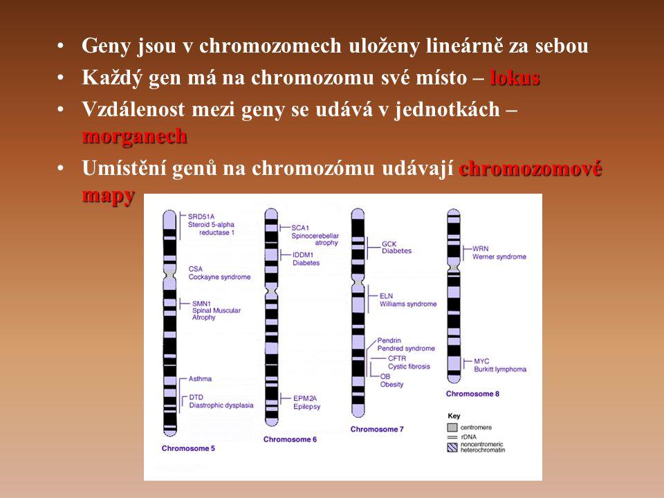 Geny jsou v chromozomech uloženy lineárně za sebou