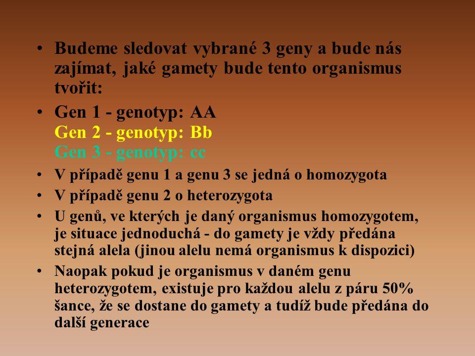 Gen 1 - genotyp: AA Gen 2 - genotyp: Bb Gen 3 - genotyp: cc
