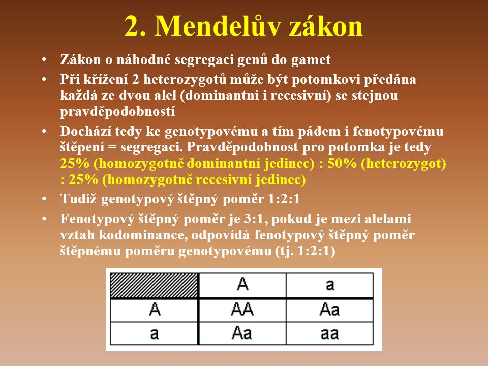 2. Mendelův zákon Zákon o náhodné segregaci genů do gamet