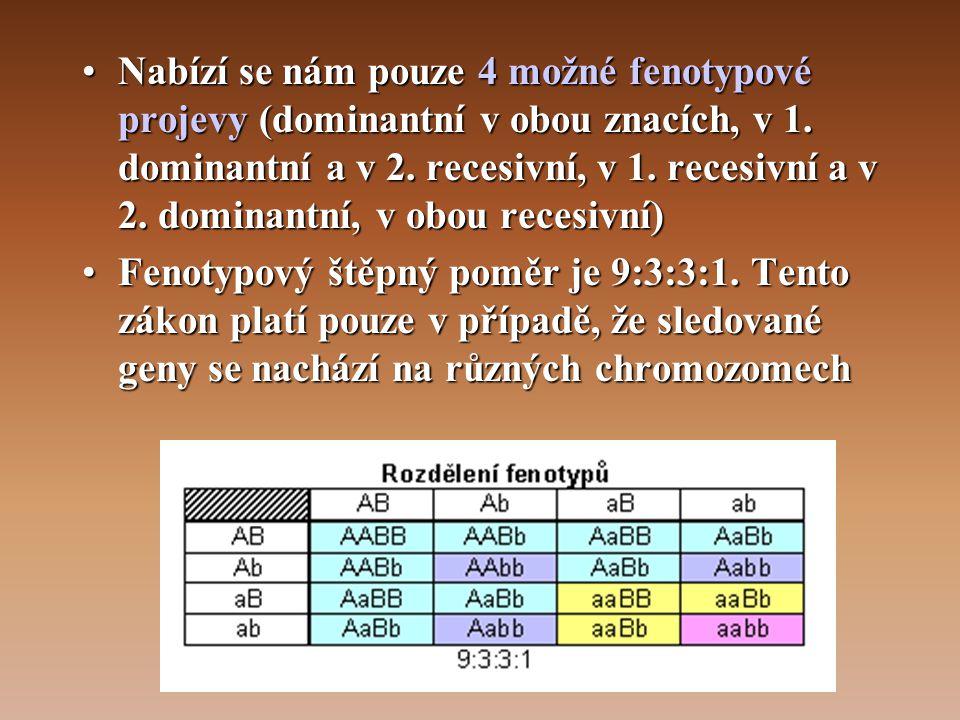 Nabízí se nám pouze 4 možné fenotypové projevy (dominantní v obou znacích, v 1. dominantní a v 2. recesivní, v 1. recesivní a v 2. dominantní, v obou recesivní)