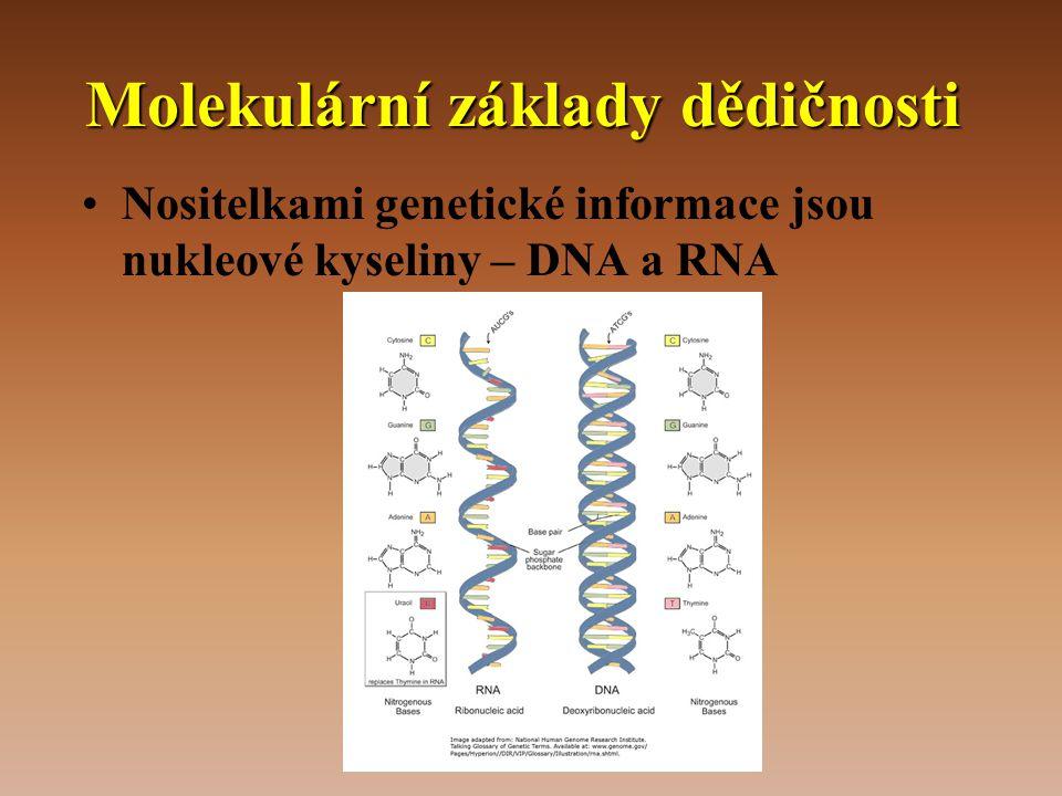 Molekulární základy dědičnosti