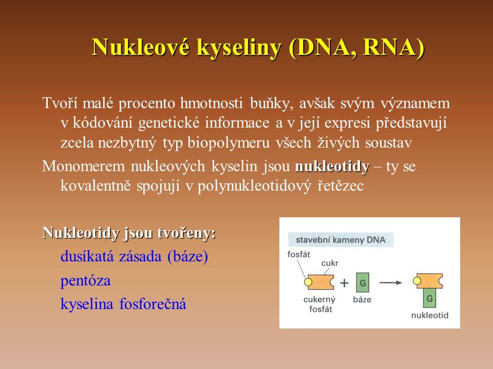 Nukleové kyseliny (DNA, RNA)