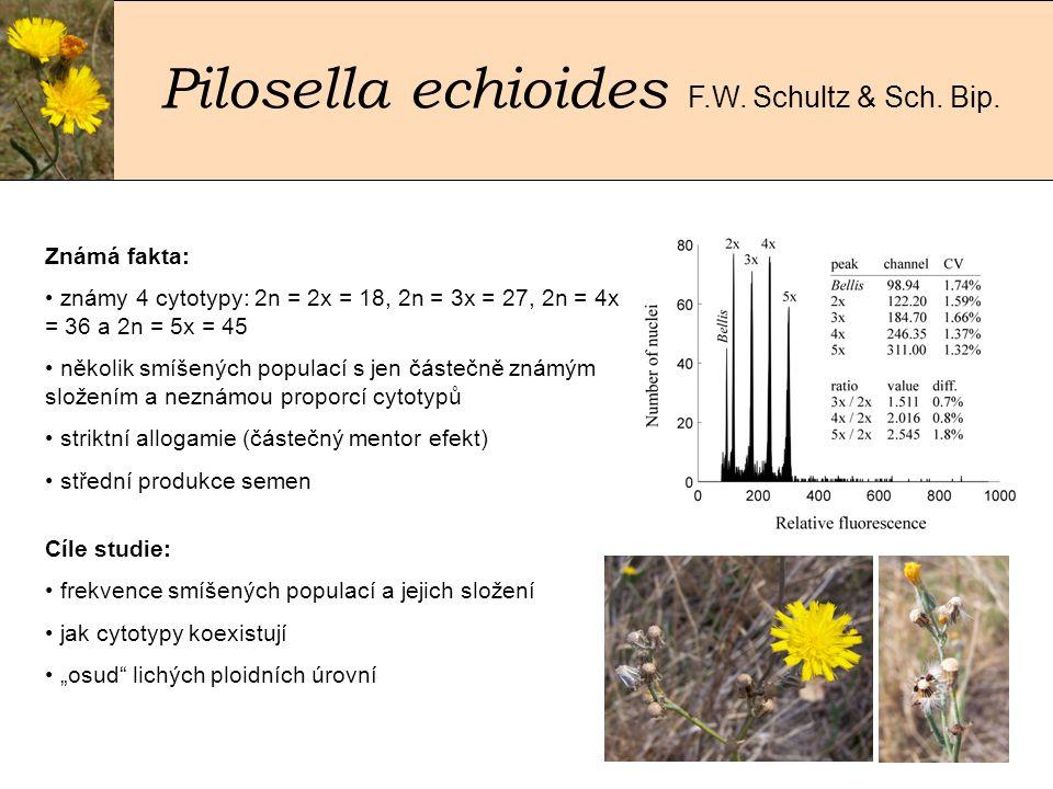 Pilosella echioides F.W. Schultz & Sch. Bip.