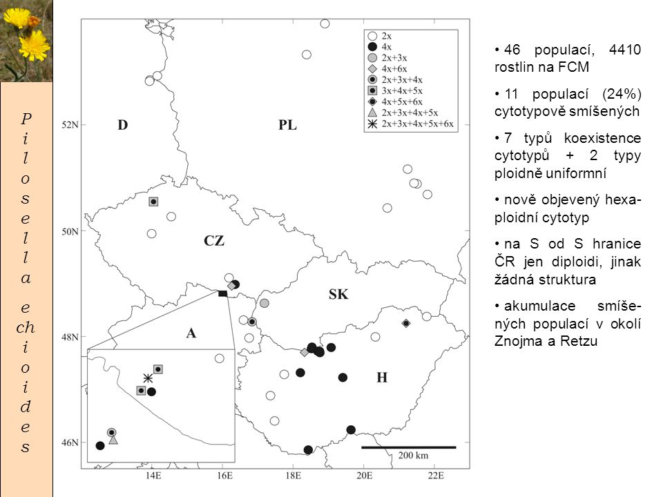 P i l o s e l l a e chi o i de s 46 populací, 4410 rostlin na FCM