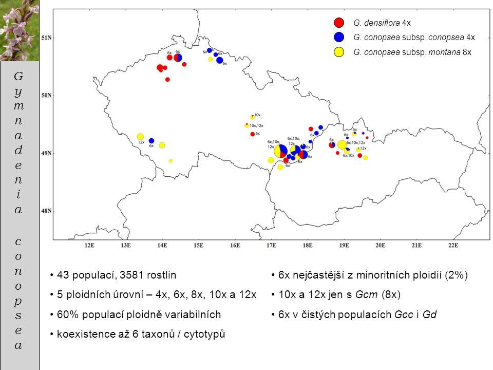 Gymnadenia conopsea 43 populací, 3581 rostlin