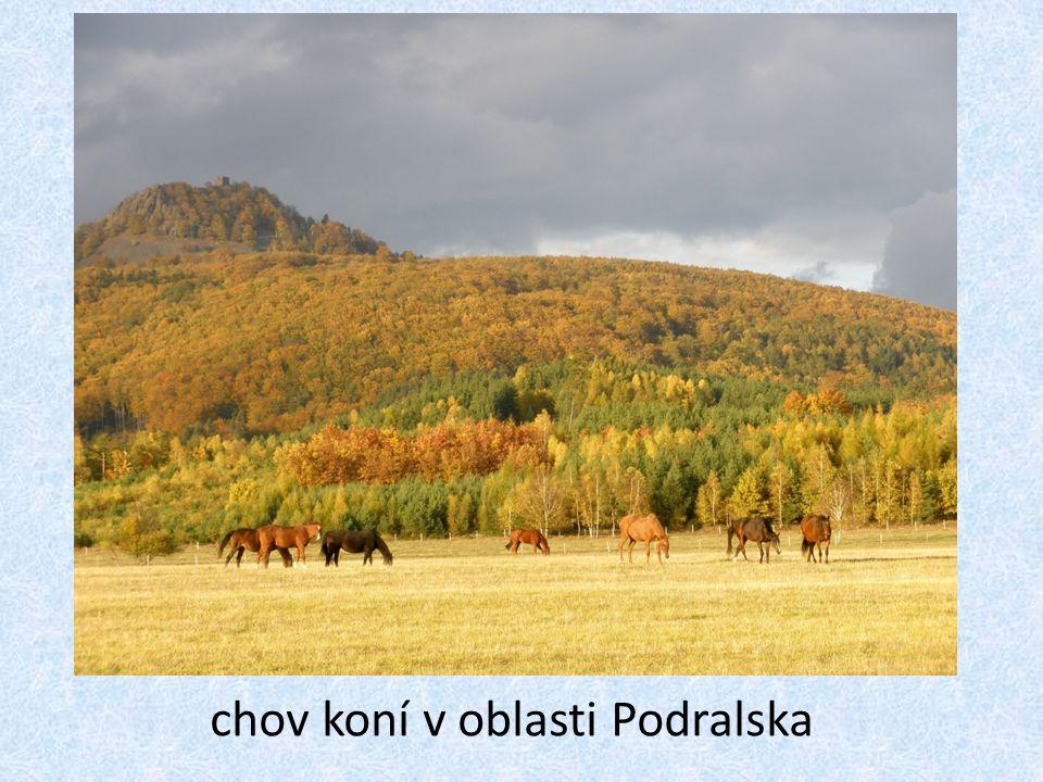 chov koní v oblasti Podralska