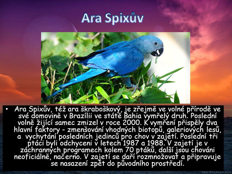 Ara Spixův