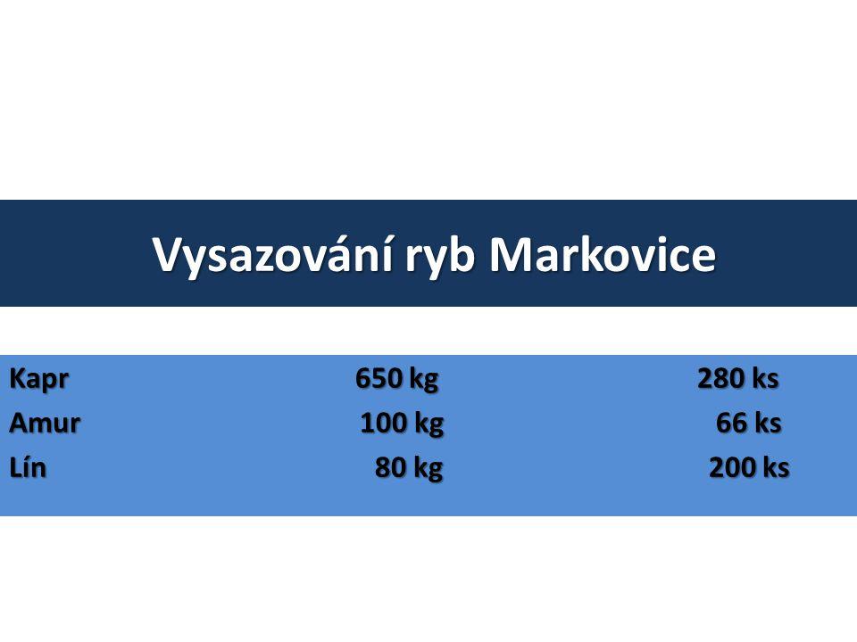 Vysazování ryb Markovice