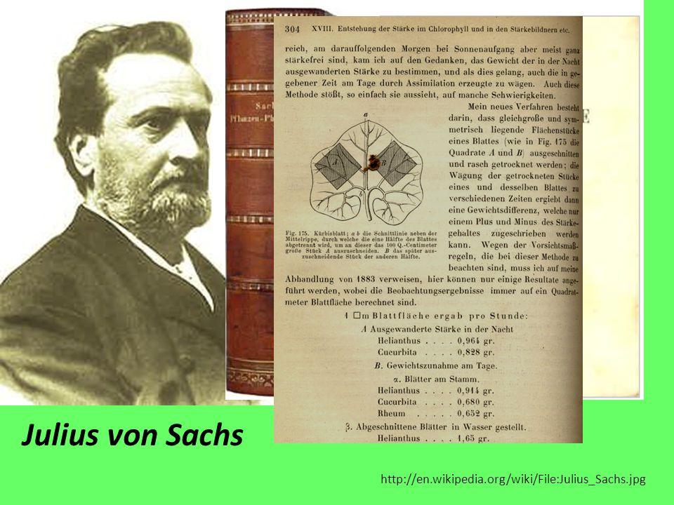 Julius von Sachs http://en.wikipedia.org/wiki/File:Julius_Sachs.jpg