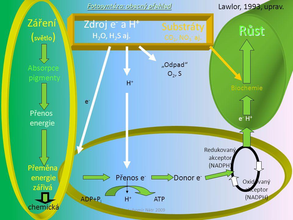 Růst Záření (světlo) Zdroj e- a H+ H2O, H2S aj.